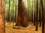 Vacation In Redwood National Park