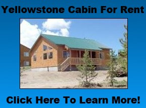Yellowstone Cabin Rental
